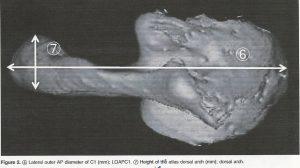 Cou5-orthodontie-drelafond